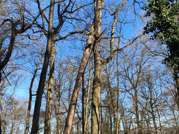 Baum droht umzufallen