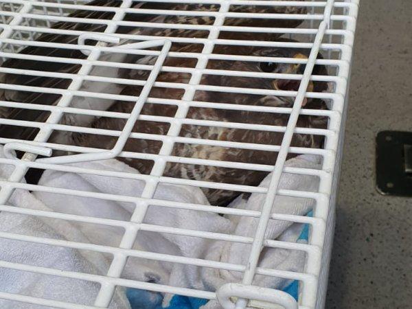 Tierrettung – Verletzter Greifvogel